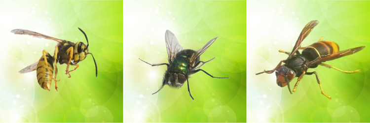 exemple insectes volants (guêpe mouche frelon)