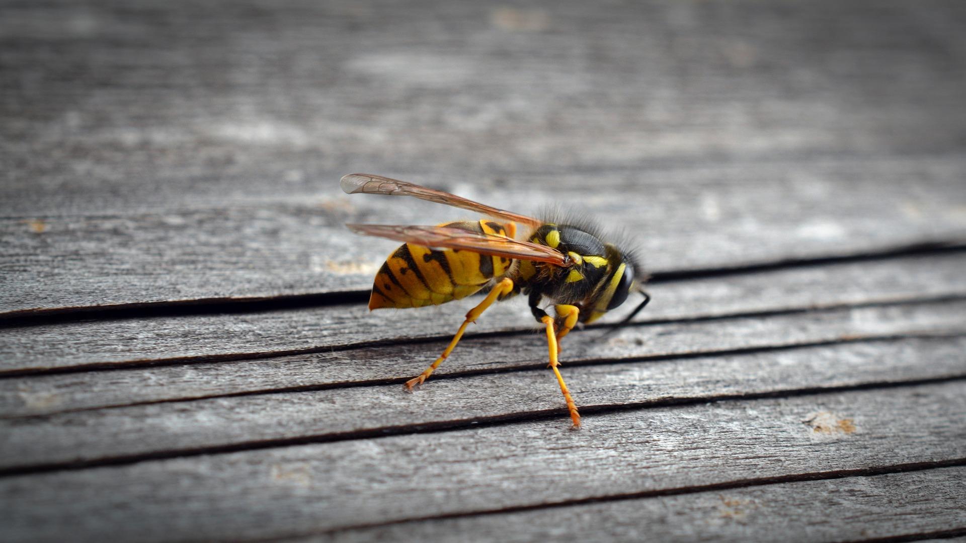 Insecte Salle De Bain Volant ~ insectes volants imago 3d entreprise sp cialiste 3d