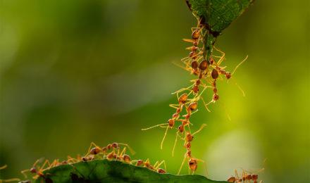 nuisibles fourmis