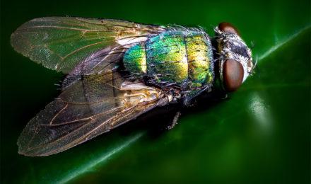 Risque santé insectes volants