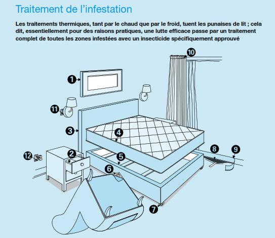 traitement punaise de lit
