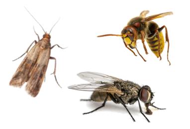 traitement insectes volants