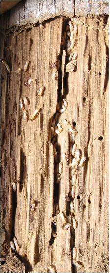 traitement bois