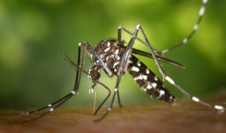risques moustiques